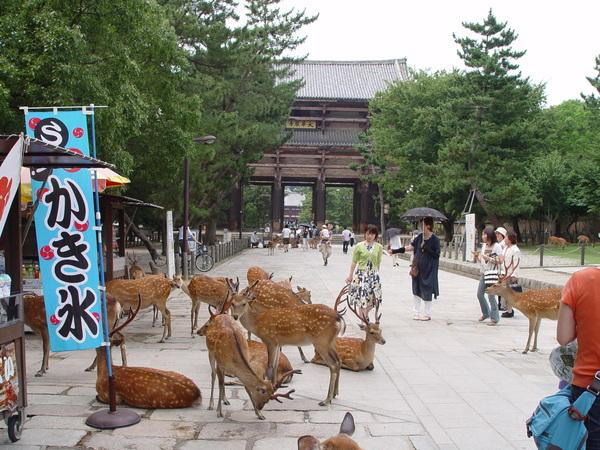 東大寺前的鹿群.jpg