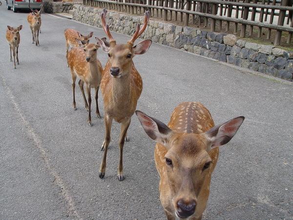 衝衝衝的鹿群.jpg