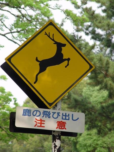 小心鹿.JPG