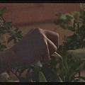 [白夜行] 知道篠塚與好友在一起後,雪穗在夜裡毀花-4