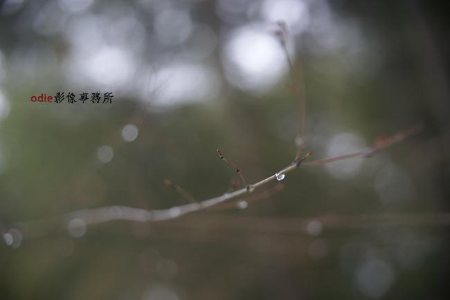 _DSC0722.jpg