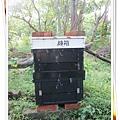 蜜蜂龍眼蜜蜂箱
