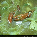 咖哩鍋螃蟹
