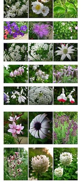 87-09花朵兒