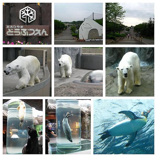 0620 01旭山動物園