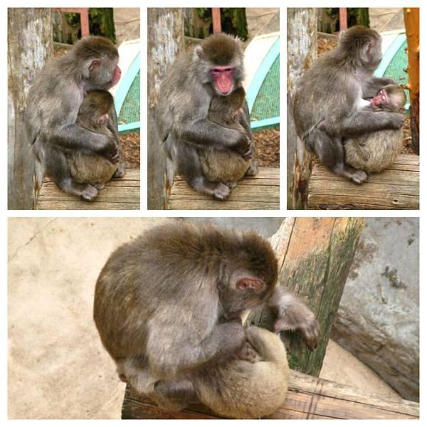 0620 03旭山 猴子