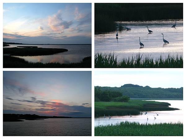 0703 09湖中鳥