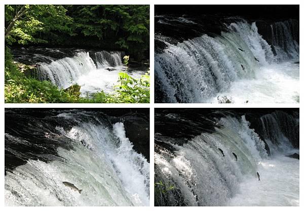 0705 16櫻花瀑布