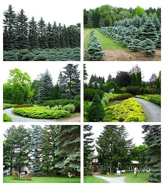 0711 10真鍋庭園 林