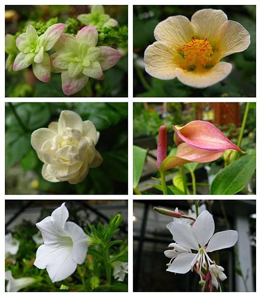 0711 06真鍋庭園 花
