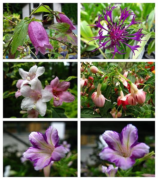 0711 09真鍋庭園 花
