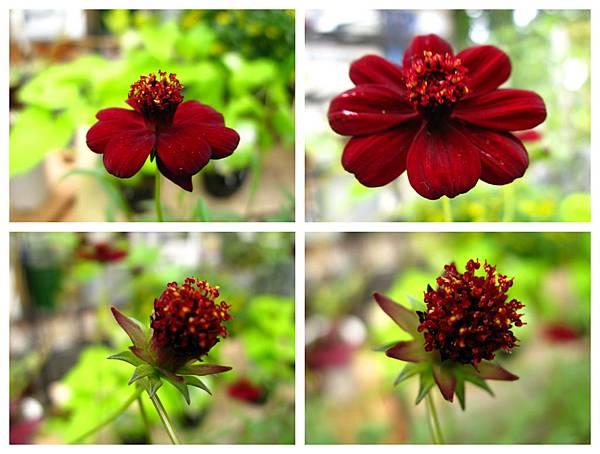 0711 08真鍋庭園 花