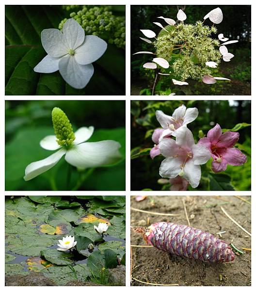 0711 05真鍋庭園 花