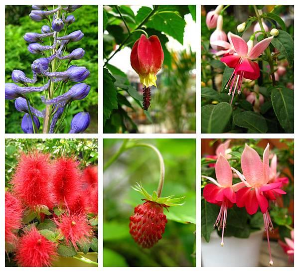 0711 07真鍋庭園 花