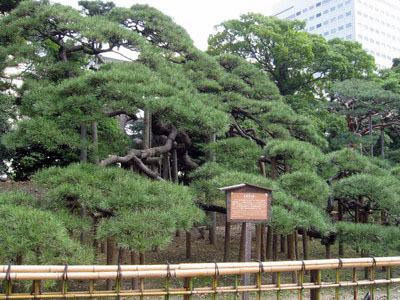 濱離宮3.JPG