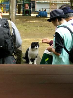 貓咪1.JPG