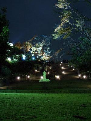 高台夜楓-1.jpg
