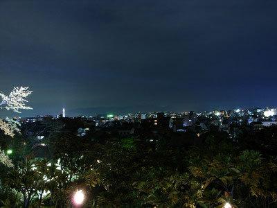 高台夜楓-2.jpg