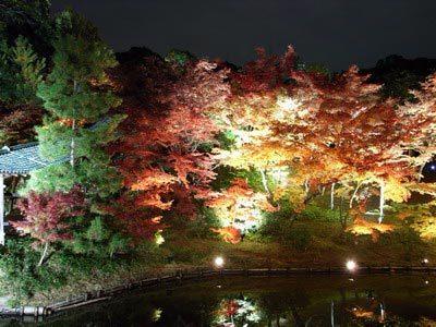 高台夜楓-5.jpg