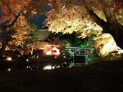 高台夜楓-7.jpg