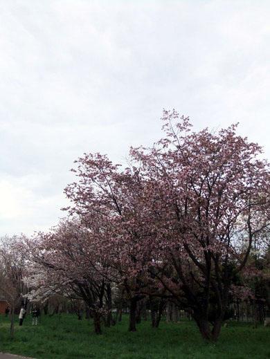 0509 真駒內公園04