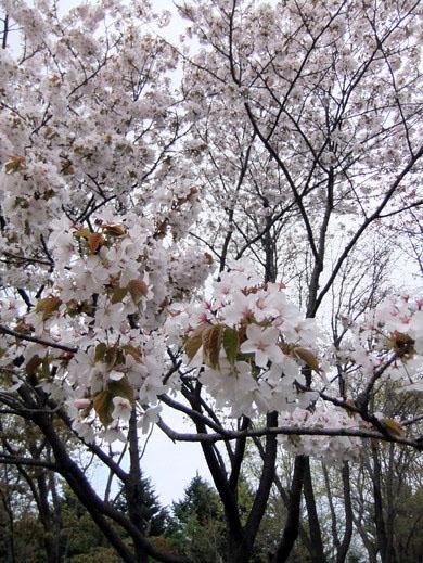 0509 真駒內公園05