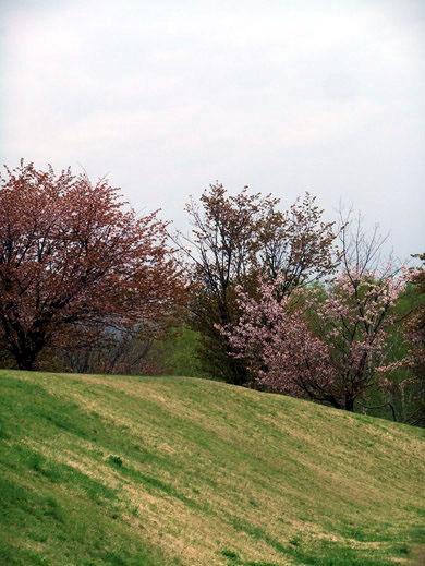 0509 真駒內公園08