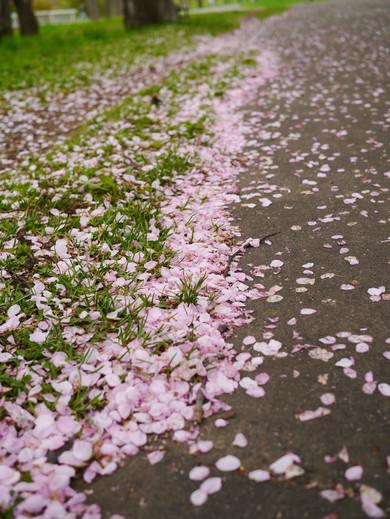 0509 真駒內公園14