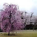 0407 大雨中的金澤21世紀美術館10