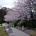 0407 大雨中的金澤21世紀美術館09