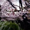 0407 大雨中的金澤21世紀美術館13