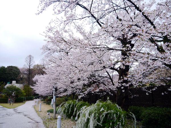 0407 大雨中的金澤21世紀美術館14