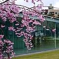 0407 大雨中的金澤21世紀美術館15