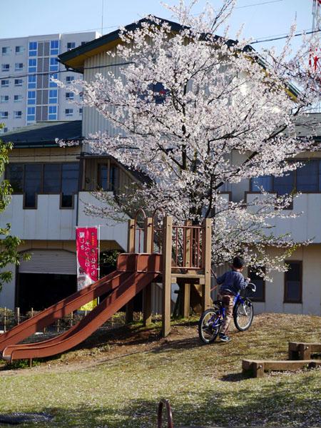 0408 福井鄉土博物館+一旁小公園05