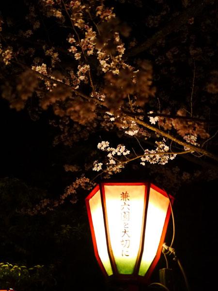 0408 兼六園夜櫻01