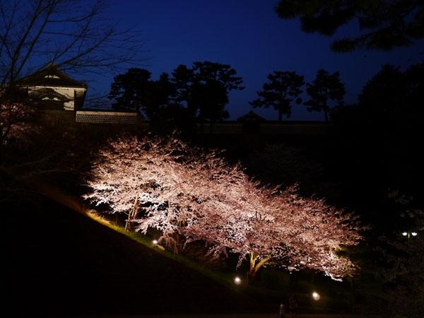0408 兼六園夜櫻03