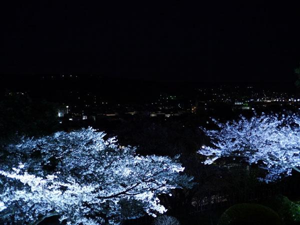 0408 兼六園夜櫻06