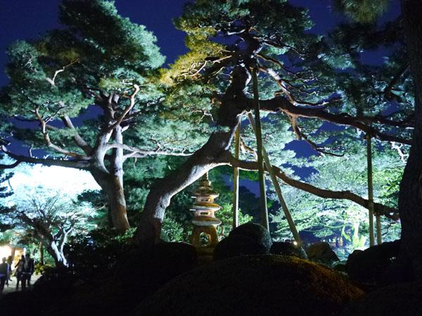 0408 兼六園夜櫻07