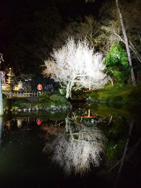 0408 兼六園夜櫻25