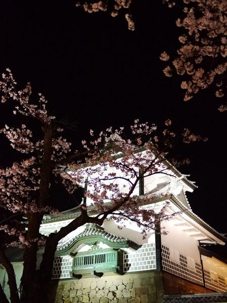 0408 金澤城公園夜櫻01