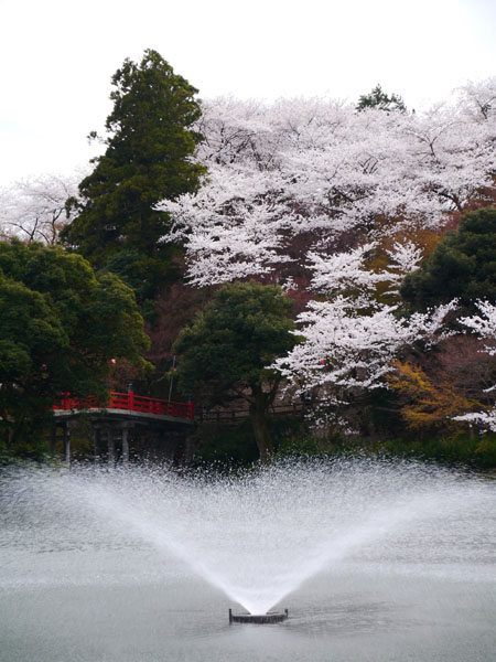 0409 高岡古城公園17.JPG