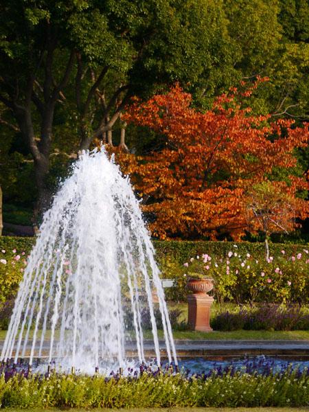 須磨離宮公園11