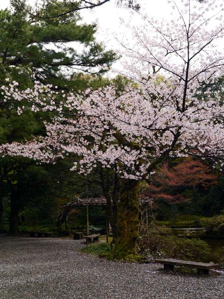 0411 尾山神社08