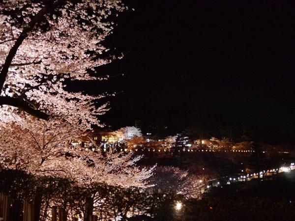 0408 金澤城公園夜櫻02