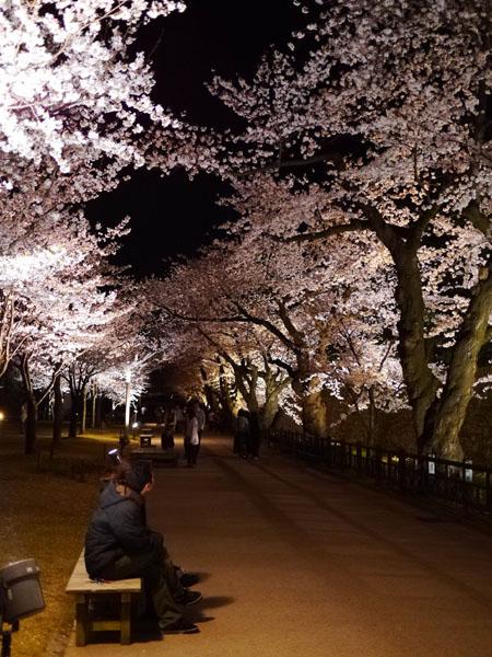 0408 金澤城公園夜櫻11