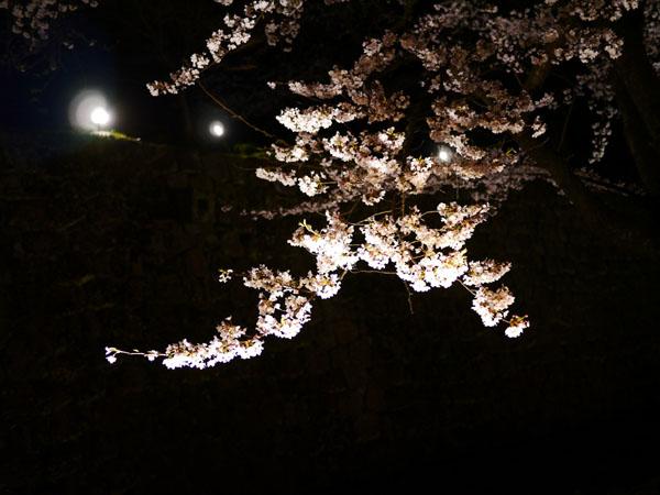 0408 金澤城公園夜櫻12