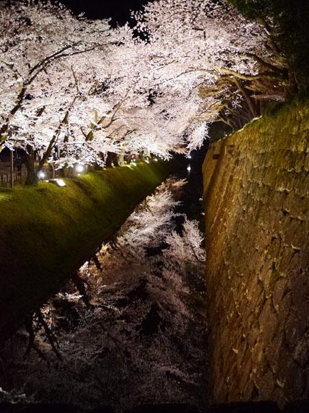0408 金澤城公園夜櫻13