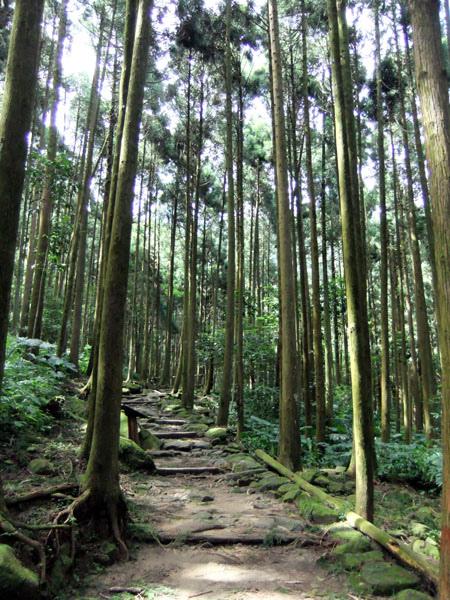 0720 馬武督綠光森林11.JPG
