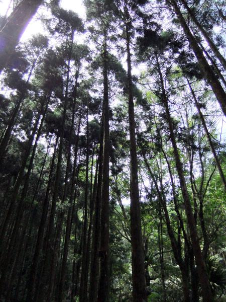 0720 馬武督綠光森林13.JPG