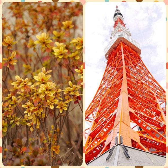 0206 東京鐵塔03.JPG